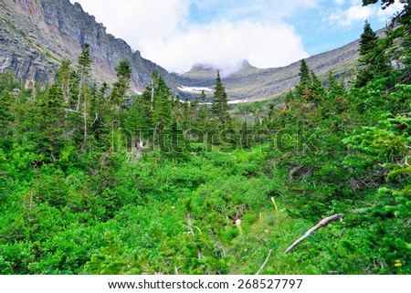 mountains and high alpine conifer forest in glacier national park in summer - stock photo