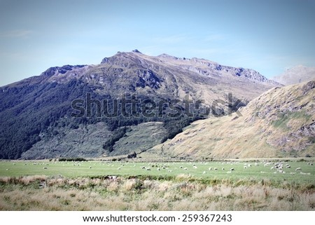 Mountains and sheep in Mount Aspiring National Park, New Zealand. Cross processed color tone - retro filtered style. - stock photo