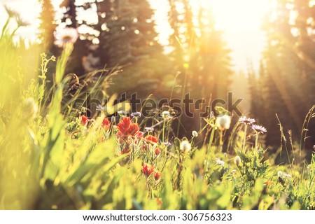 mountains meadow - stock photo