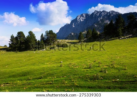 Mountains meadow in sunny summer day. Pyrenees, Catalonia - stock photo