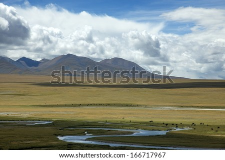 Mountains river in Tibet cattle - stock photo