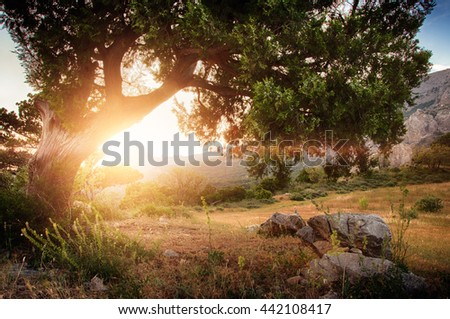 mountains sunset in Foros (Ukraine, Crimea - 2016) - stock photo