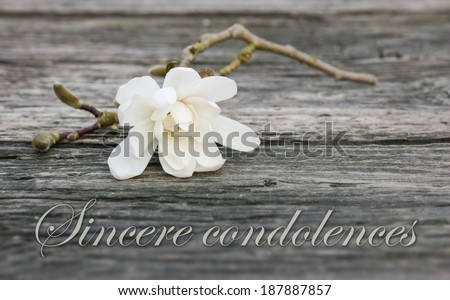 mourning card with white magnolia/sincere condolences/english - stock photo