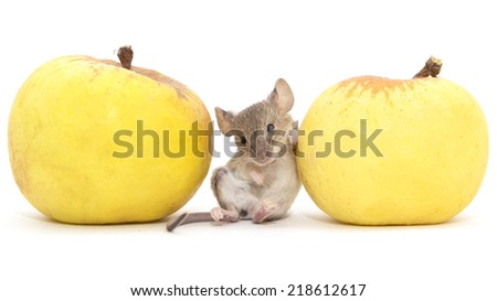 mouse and apple on a white background - stock photo
