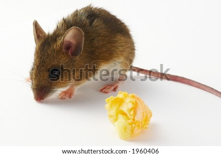 Mouse and cheese - white background - stock photo