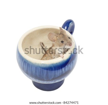 mouse in a blue glass - stock photo