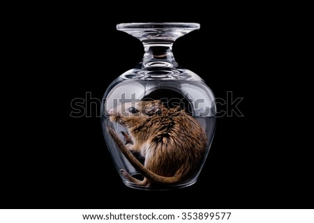 mouse in a glass on a  black background - stock photo