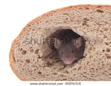 mouse in their bread house - stock photo