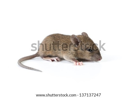 Mouse isolated on white - stock photo