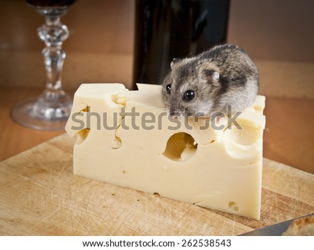 Mouse loves cheese - stock photo