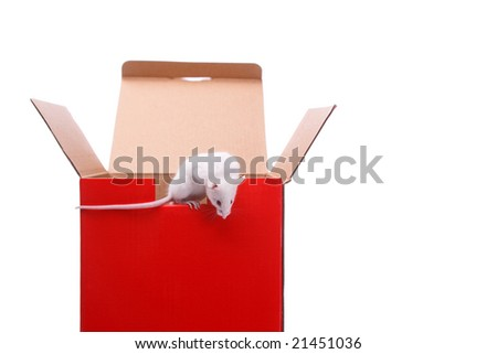 mouse outside the box,isolated on white background - stock photo