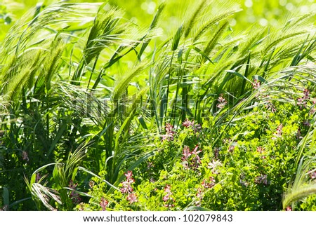 Movement for flower fields in the Wind - stock photo