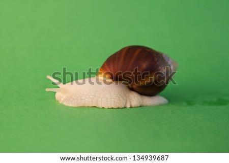 Moving big snail - stock photo