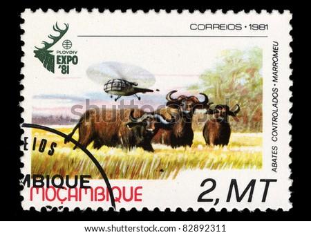 MOZAMBIQUE - CIRCA 1981: A stamp printed in Mozambique shows cow, abates controlados, Marromeu, circa 1981 - stock photo