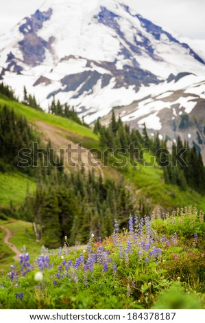 Mt. Baker Wildflowers. August is the best time for wildflower viewing in the Mt. Baker National Forest. Lupine, Indian Paintbrush and asters dominate the landscape. - stock photo