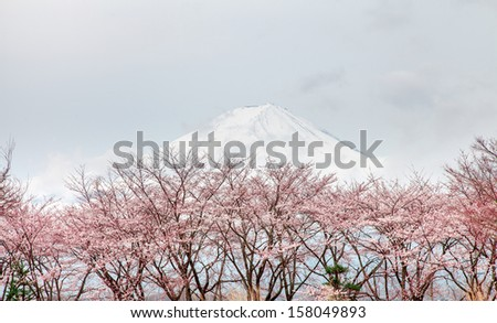 Mt fuji and pink cherry blossom tree in spring Kawaguchi lake, Japan - stock photo