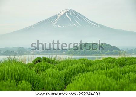 Mt fuji in morning at kawaguchi, Japan - stock photo