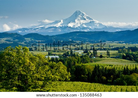 Mt. Hood Towering Over the Vineyards of the Columbia River Valley - stock photo