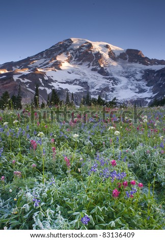 Mt. Rainier and Wildflowers in Bloom Vertical Mountain Landscape Scene - stock photo