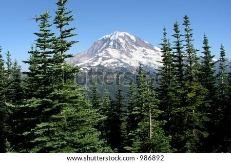 Mt. Rainier, Washington Through the trees - stock photo