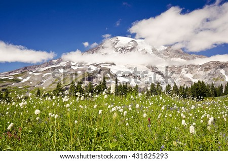Mt Rainier with beautiful wild flowers at the foreground - stock photo