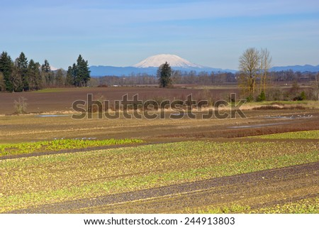 Mt. St. Helens farm fields wild life in Suvie Island Oregon. - stock photo
