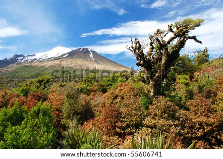 Mt Taranaki, New Zealand - stock photo