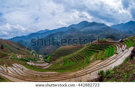 MUCANGCHAI , VIETNAM - MAY 21, 2016 : Rice fields on terraced of Mu Cang Chai , Vietnam. Rice fields prepare the harvest at Northwest Vietnam.Vietnam landscapes. - stock photo
