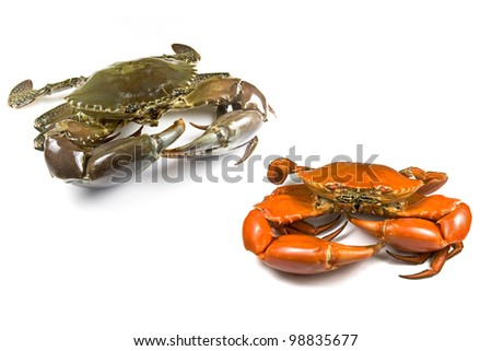 Mud Crabs - stock photo
