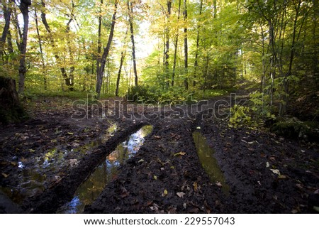 Muddy Road in Autumn tire tracks and trees - stock photo