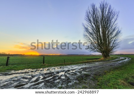 Muddy sand road with trees at sunrise in Holland - stock photo