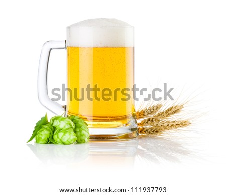 Mug fresh beer with Green hops and ears of barley isolated on a white background - stock photo