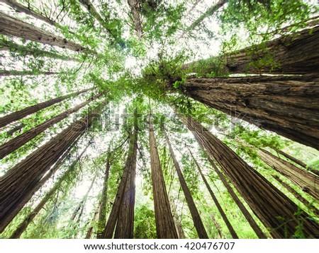 Muir Woods, California, USA - stock photo
