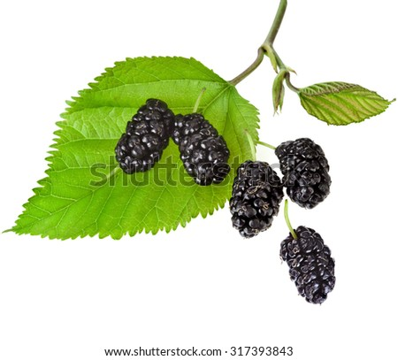 Mulberries with leaf Isolated on white background - stock photo