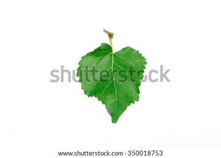 Mulberry leaf on white background - stock photo