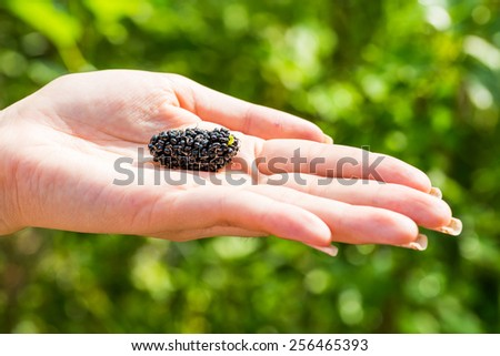 Mulberry on woman hand with green bokeh blackground - stock photo