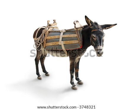 Mule / Donkey (isolated on white with shadow) - stock photo