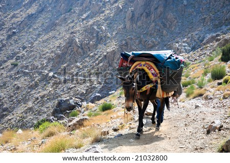 mule in the high atlas mountains - stock photo