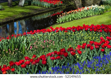 Multi colored tulip pattern and reflection in water in spring garden - stock photo