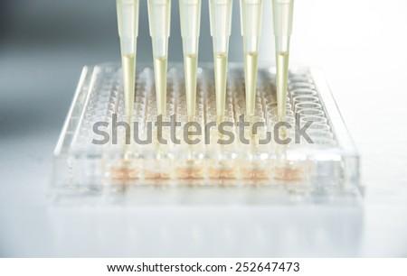 multichannel pipette - stock photo