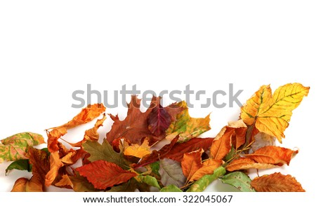 Multicolor autumn dry leafs. Isolated on white background with copy space - stock photo