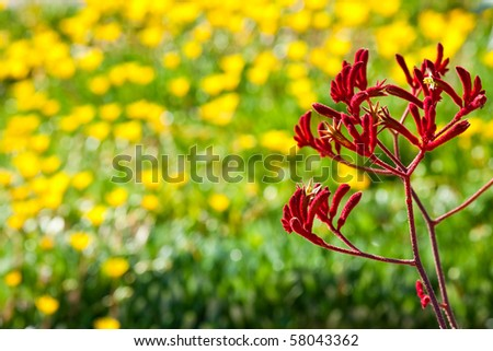 Multicolor Flower background - stock photo