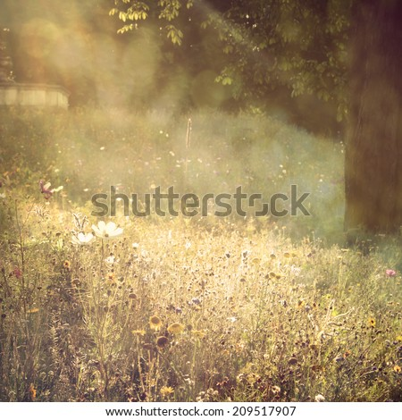 multicolor flowers field background with summertime warm glitter - stock photo