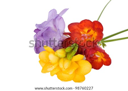 Multicolor freesies  on a white background - stock photo