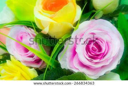 Multicolor rose background - stock photo