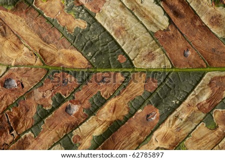 multicolored autumnal horse-chestnut leaf - stock photo