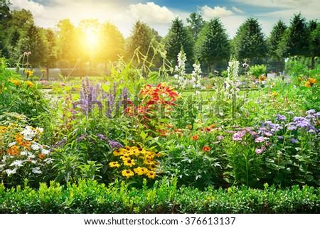 Multicolored flowerbed in park. Sunrise. - stock photo