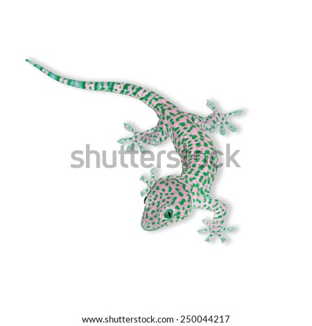 Multicolored Gecko isolated on white background, with clipping path - stock photo