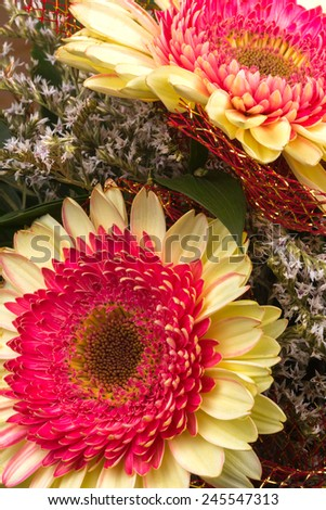 multicolored gerbera flowers in a composition fills the frame - stock photo