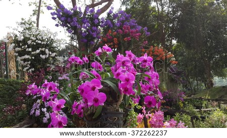 Multicolored orchids - stock photo